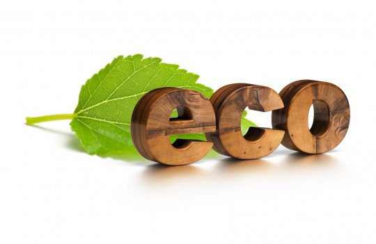 wooden eco word and green leaf